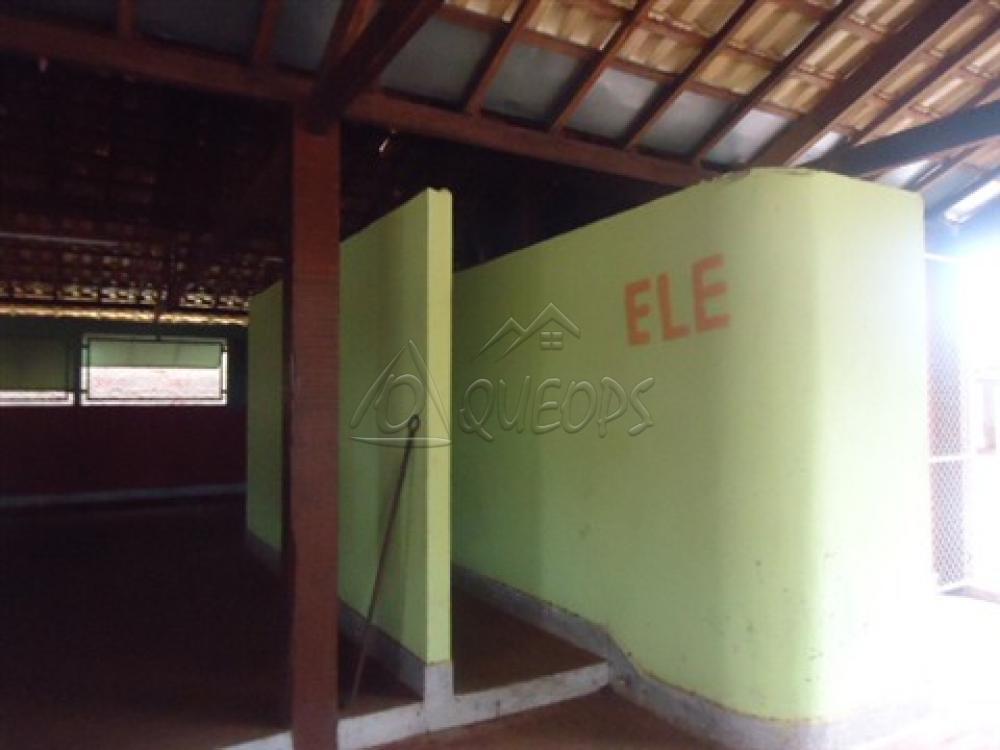 Alugar Comercial / Barracão em Alberto Moreira (Barretos) R$ 2.000,00 - Foto 16