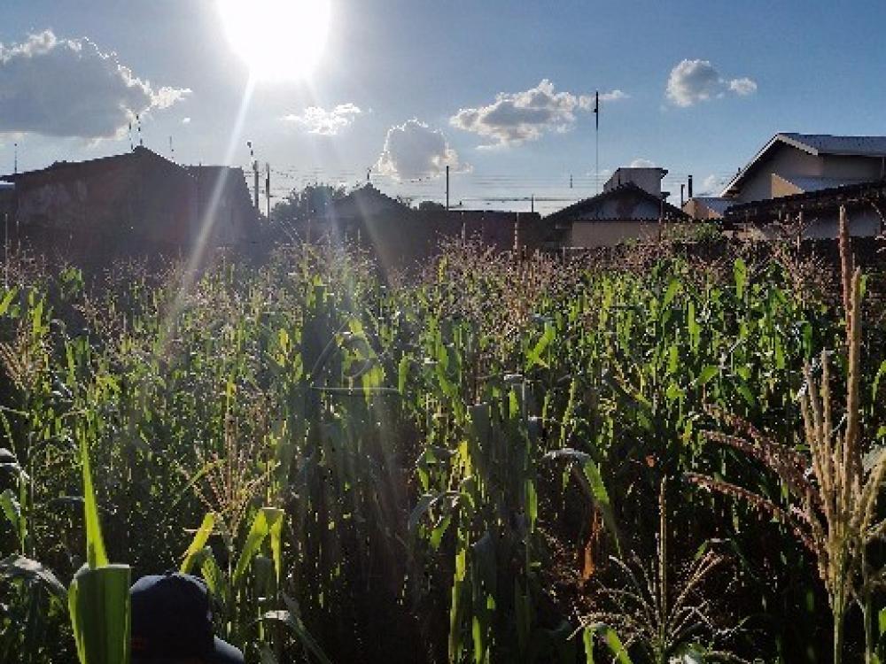 Comprar Terreno / Padrão em Barretos apenas R$ 85.000,00 - Foto 2