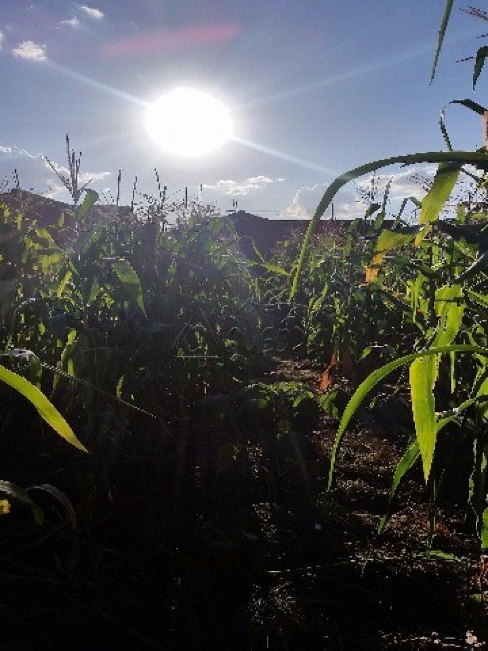 Comprar Terreno / Padrão em Barretos apenas R$ 85.000,00 - Foto 3